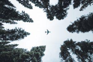 Flugzeug Bäume Umzug Weltweit International